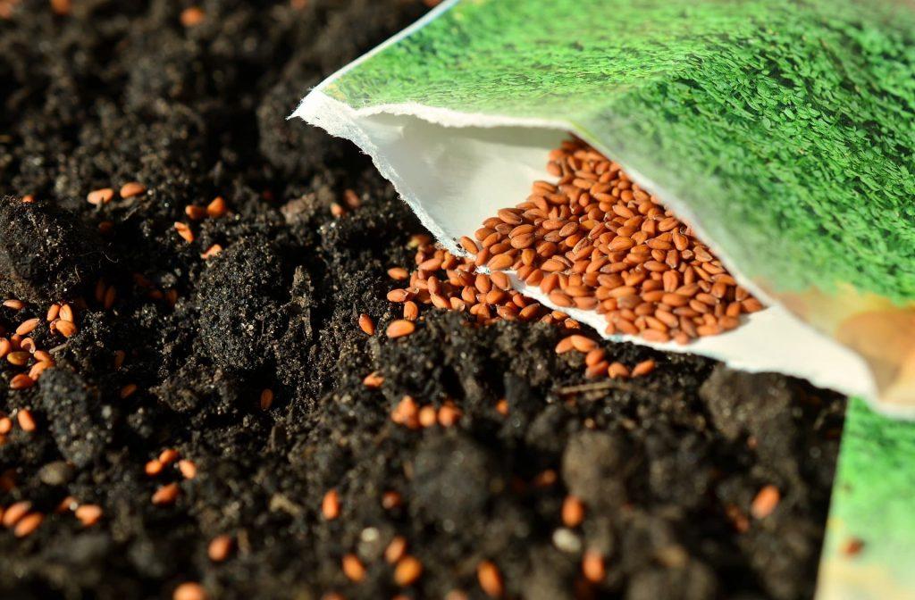 seeds-product-development